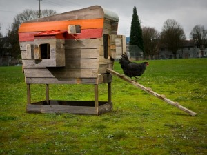 Chicken Dwelling