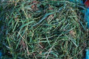 Green (Nitrogen) Compost