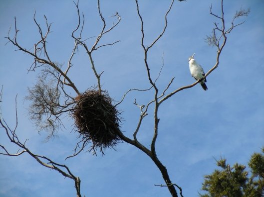Bird with nest