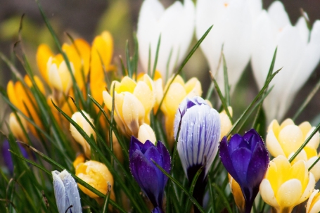springtime_is_here_by_darksoul4life-d4s0wx9