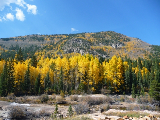 hillside of color